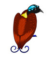 bird of paradise icon vector image vector image