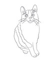 cat lines vector image vector image