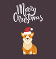 merry christmas dog with hat vector image