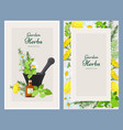 floral cards herbalism medicine products wild vector image