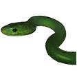 Green Mamba vector image vector image