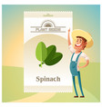 pack of spinach seeds icon vector image