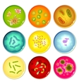 Petri dishes with bacterial colonies vector image