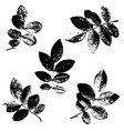 set of rose leaves silhouettes vector image