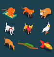 pet shop isometric icons set vector image
