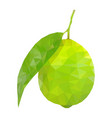 lime with leaf polygonal vector image vector image