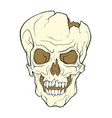 the skull of a grinning vampire color vector image