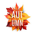 autumn foliage leaf poster of fall leaves vector image