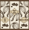 banner set with hand drawn black pepper vector image vector image