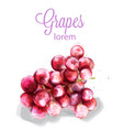 grapes watercolor summer fruits icon label vector image vector image