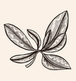 floral ornament engraving vector image