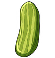 A cucumber vector image