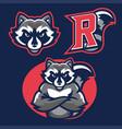 racoon in sport mascot vector image vector image