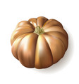 ripe autumn pumpkin on white background vector image vector image