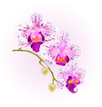 beautiful orchid purple and white phalaenopsis vector image vector image