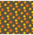 Colourful Autumn leaves vector image vector image