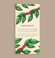 arabic plant coffee beans java plant