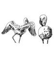 drawing flamingo birds vector image vector image