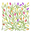 a set fresh tulip flowers background vector image vector image