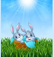 baby bunnies in a basket with a towel on the grass vector image vector image