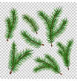 realistic spruce fir tree branches set vector image vector image