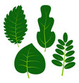 set of four green leaves on white background vector image vector image