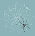 spider on wet web vector image vector image