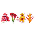 tropical exotic flowers isolated on white vector image vector image