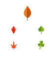 flat icon leaf set of foliage hickory leaf and vector image vector image