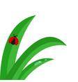 fresh green grass stalk close up water drop set vector image vector image