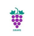 grape logo on white vector image vector image