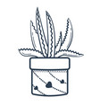 linear style flower aloe vector image vector image