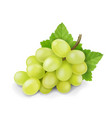 yellow or green grapes branch with leaves vector image
