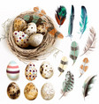 collection with easter eggs bird nest feathers vector image