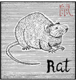 engraved of zodiac symbol with rat vector image