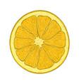 orange slice hand drawn sketch vector image vector image