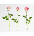 realistic pink rose set three 3d roses vector image