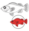 sea bass vector image vector image