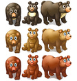 Collection of bears vector image vector image