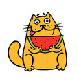 cute fat cat eats watermelon cat isolated vector image vector image