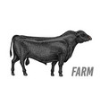 farm cattle bull or cow natural milk and meat vector image vector image