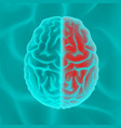 glowing human brain vector image