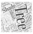 Growing Trees for Shade Word Cloud Concept vector image vector image