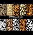 animal fur seamless patterns leopard tiger zebra vector image