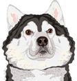 dog Alaskan Malamute breed vector image vector image