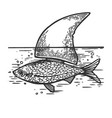 fish with shark fin engraving vector image vector image