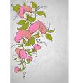 flowers sweet pea vector image vector image