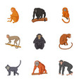 species of chimpanzee icons set cartoon style vector image vector image