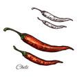 chili pepper seasoning plant sketch icon vector image