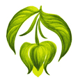 decorative ornament soursop bud vector image vector image